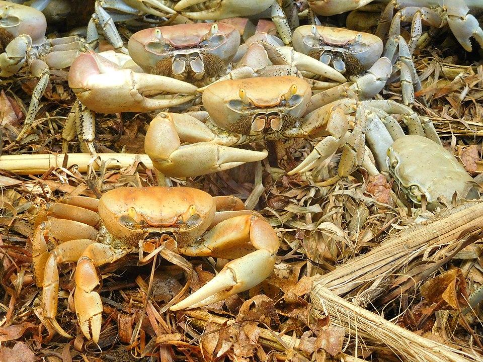 Matoutou crabe pâques Martinique Tous Créoles !